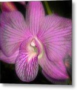 Lavender Orchid Metal Print