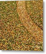 Lawn Covered With Fallen Leaves Metal Print