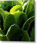 Layers Of Romaine Metal Print