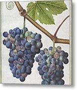 Le Moyne: Grape Vine, C1585 Metal Print