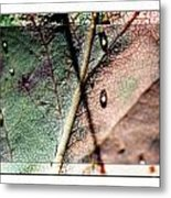 Leaf After Rain Metal Print