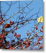 Leaf Among Thorns Metal Print