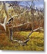 Leaf Barren White Tree Trunk In California No.1500 Metal Print