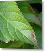 Leaf Blemish Metal Print
