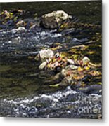 Leaf Collection Metal Print