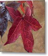 Leaf In Red Metal Print