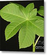 Leaf Of Castor Bean Plant Metal Print
