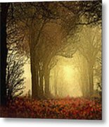 Leaf Path Metal Print by Robert Foster