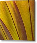 Leaf Patterns Metal Print