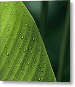 Leaf With Water Drops, Barro Colorado Metal Print