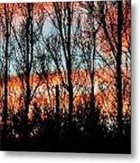 leafless Trees Metal Print