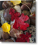 Leafs And Stones Metal Print