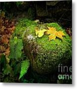 Leafs On Rock Metal Print