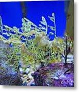 Leafy Seadragon Phycodurus Eques At The Metal Print by Stuart Westmorland