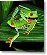 Leap Frog Metal Print