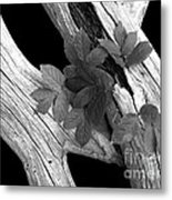 Leaves And Driftwood Bw Metal Print