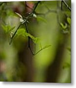 Leaves And Thorns Metal Print