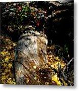 Leaves Around The Tree Trunks Metal Print