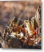 Leaves In Stump Metal Print