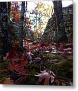 Leaves In The Forest Metal Print