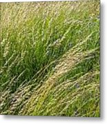 Leaves Of Grass Metal Print