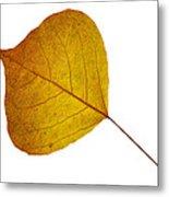 Leaves Ten  Metal Print