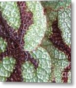 Leaves With Beautiful Texture Metal Print