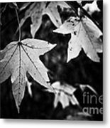 Leaves Without Color Metal Print