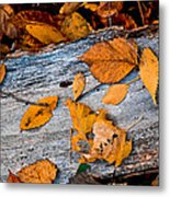 Leaves3 Metal Print