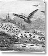 Lemming Migration Metal Print