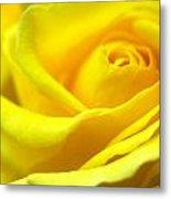 Lemon Yellow Rose Metal Print
