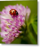 Lensbaby Ladybug On Pink Clover Metal Print