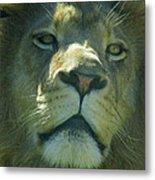 Leo,lion Metal Print