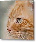 Leo The Kitty Beast Metal Print