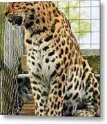 Leopard 5 Metal Print
