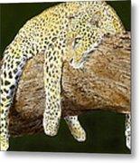 Leopard At Rest Metal Print by Yvonne Scott