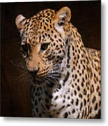 Leopard I Metal Print