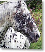 Leopard Of The Pacific Metal Print