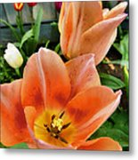 Lets All Dance For The Tulips Are Out Metal Print