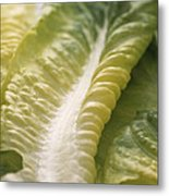 Lettuce Leaf Metal Print by Sheila Terry