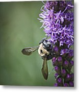 Liatris And Bee Squared 2 Metal Print