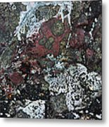 Lichen Abstract II Metal Print