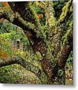 Lichen Covered Apple Tree, Walled Metal Print