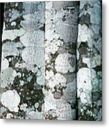 Lichen On Cinnamon Trees Metal Print by Georgette Douwma