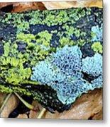 Lichen On Fallen Branch Metal Print