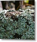 Lichens Lace Metal Print
