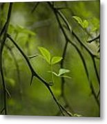 Life And Thorns Metal Print