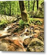 Life On The Rocks Metal Print
