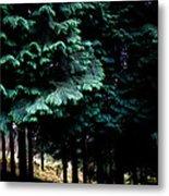 Light Forest Metal Print