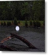 Light On A Limb Metal Print